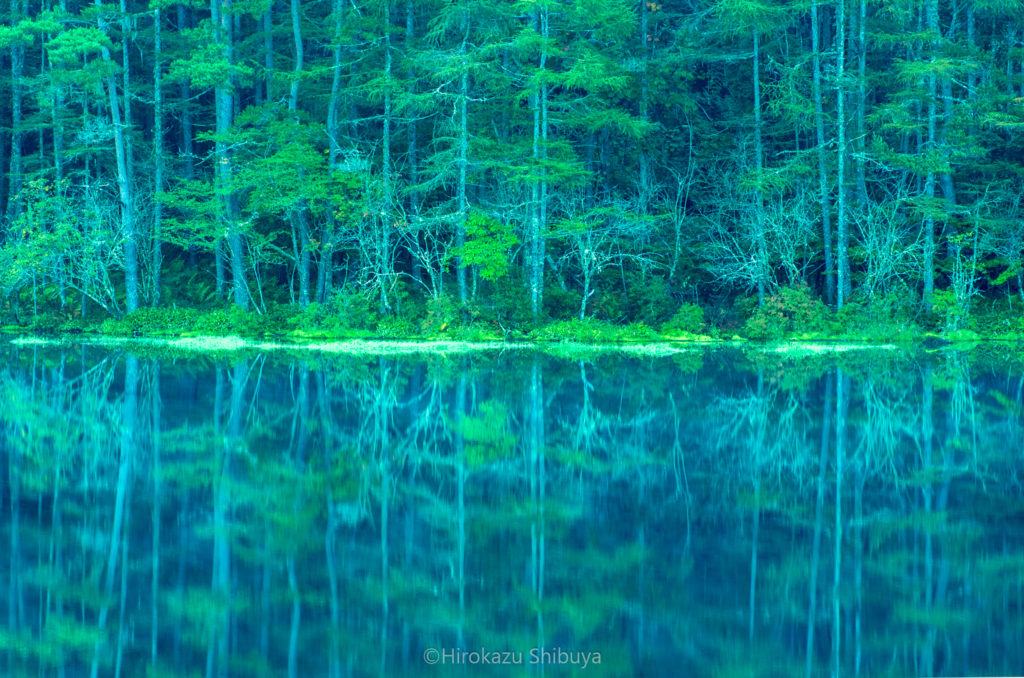 緑あふれる早朝の御射鹿池
