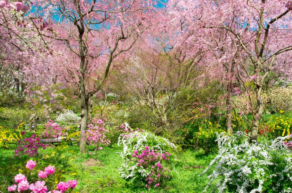 京都で写真を撮るなら押さえておきたい撮影スポット⑤ 原谷苑