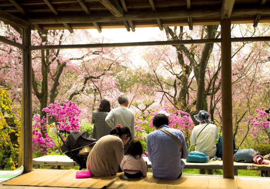 20150404_Kyoto_IGP6655