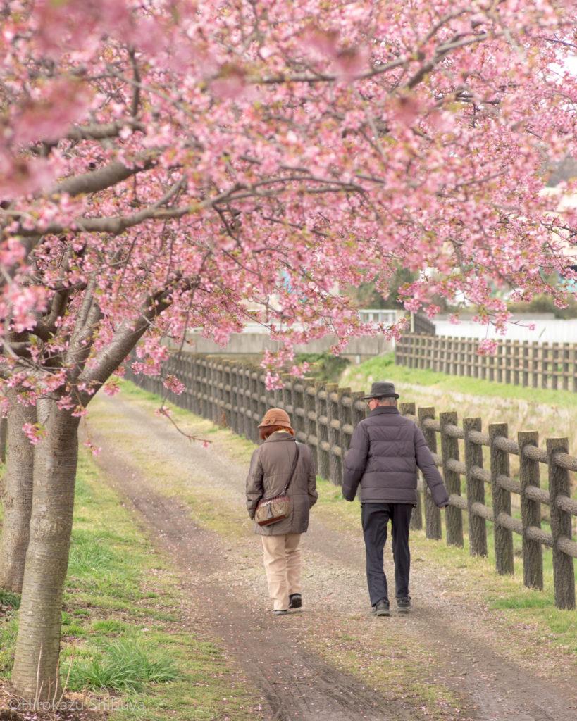 すみよし桜の里(埼玉県坂戸市)