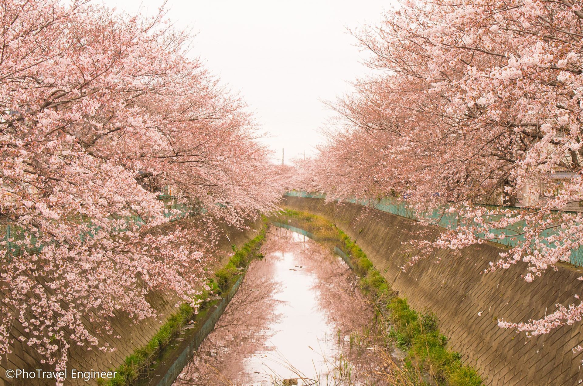 武蔵野線沿線(東浦和~東川口)の桜① 川口市にある伝右川の桜並木