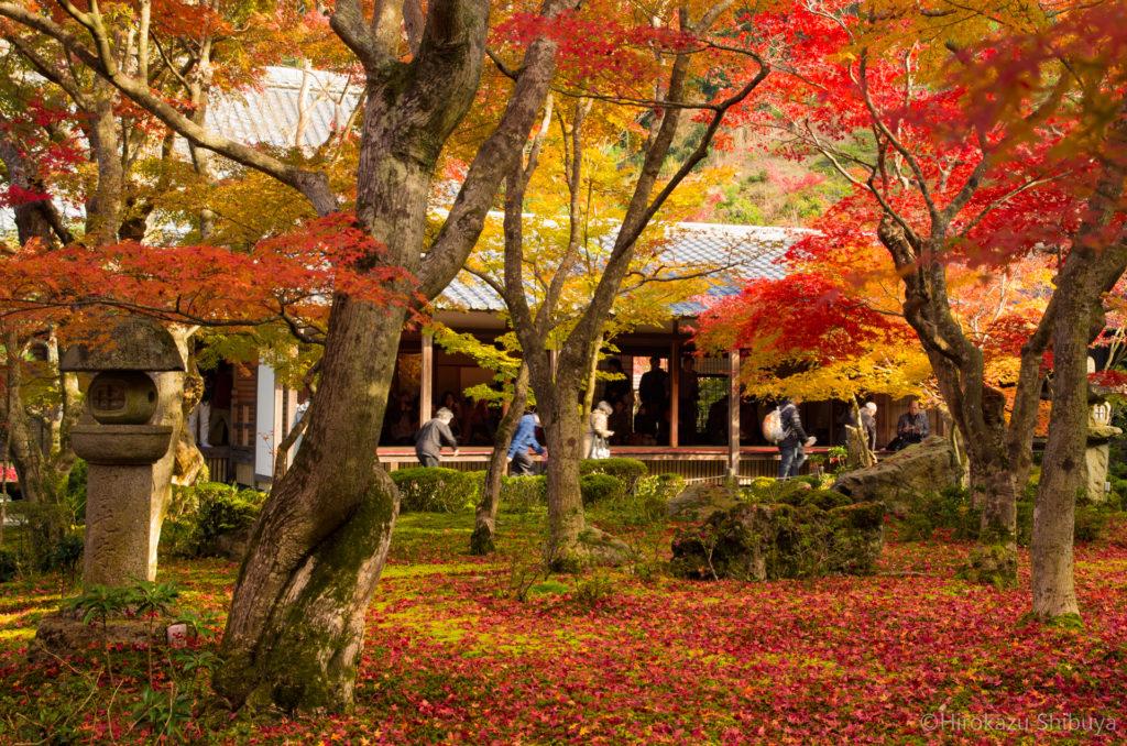 圓光寺・十牛の庭の紅葉(2014年11月撮影)