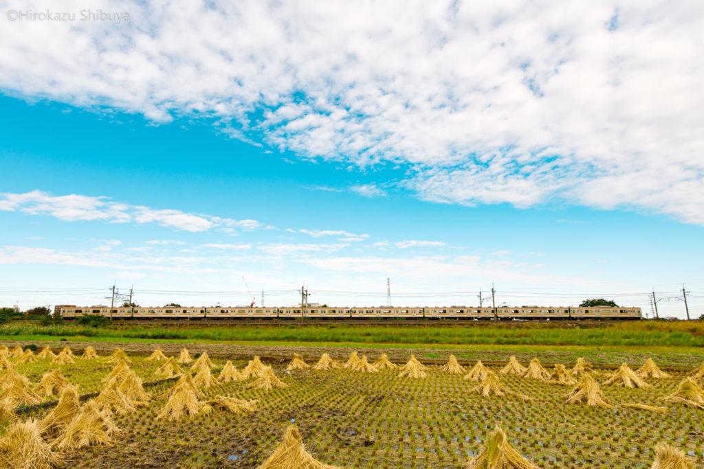 大間木公園付近の田んぼと武蔵野線205系(JR武蔵野線 東浦和駅~東川口駅)