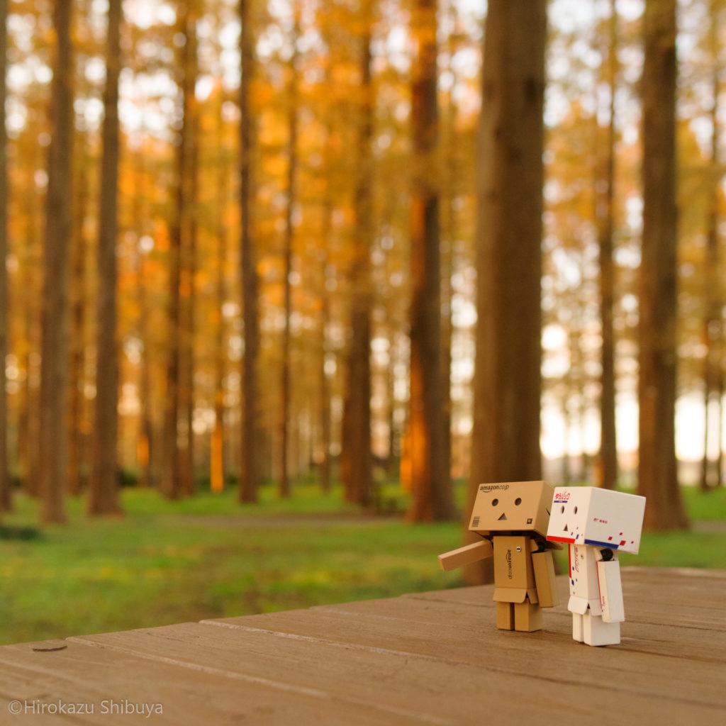 メタセコイアの紅葉とダンボーたち(水元公園「メタセコイアの森」にて撮影)