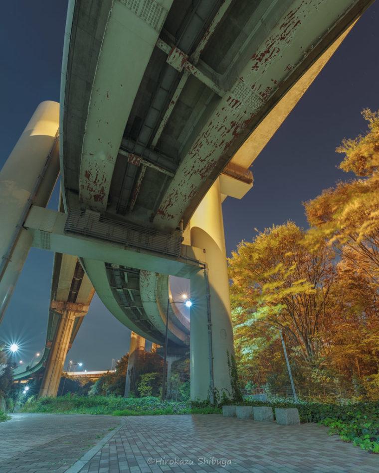 川口ジャンクション夜景