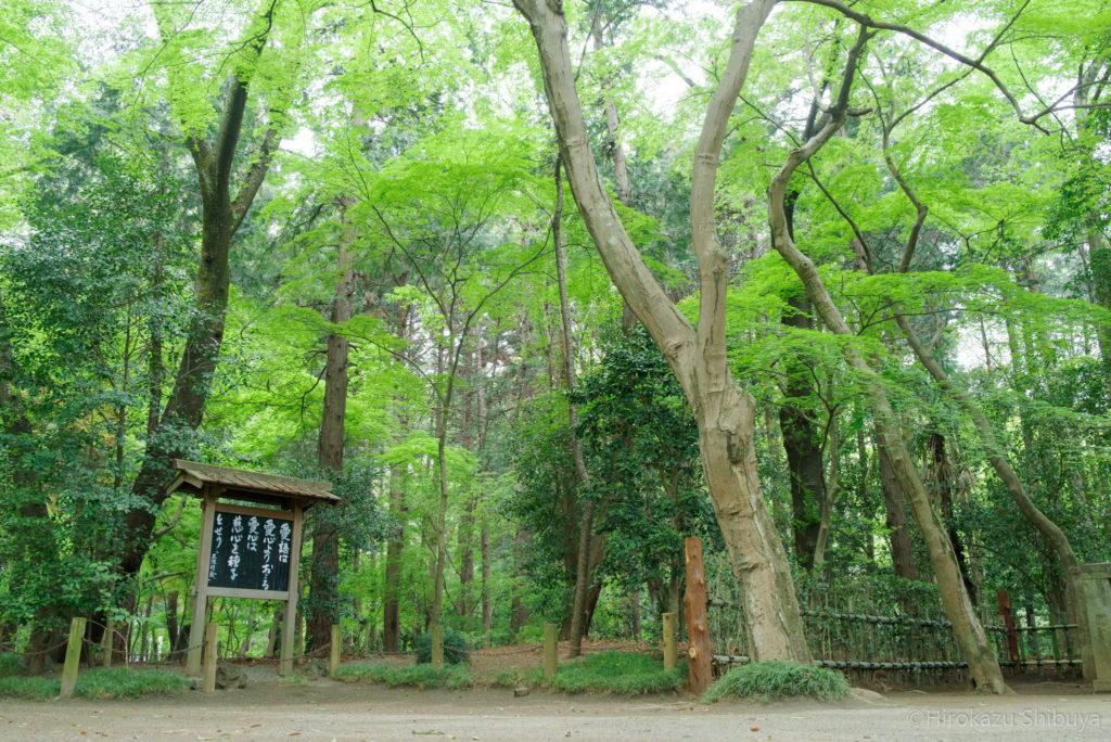 平林寺の新緑② 禅の教えと武蔵野の木々の新緑(撮影地:埼玉県新座市)