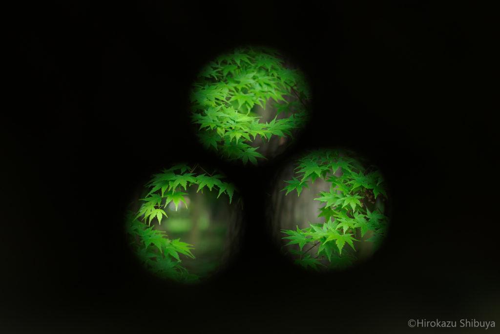 平林寺の新緑⑤ 石塔の三つの穴から望む新緑モミジ(撮影地:埼玉県新座市)