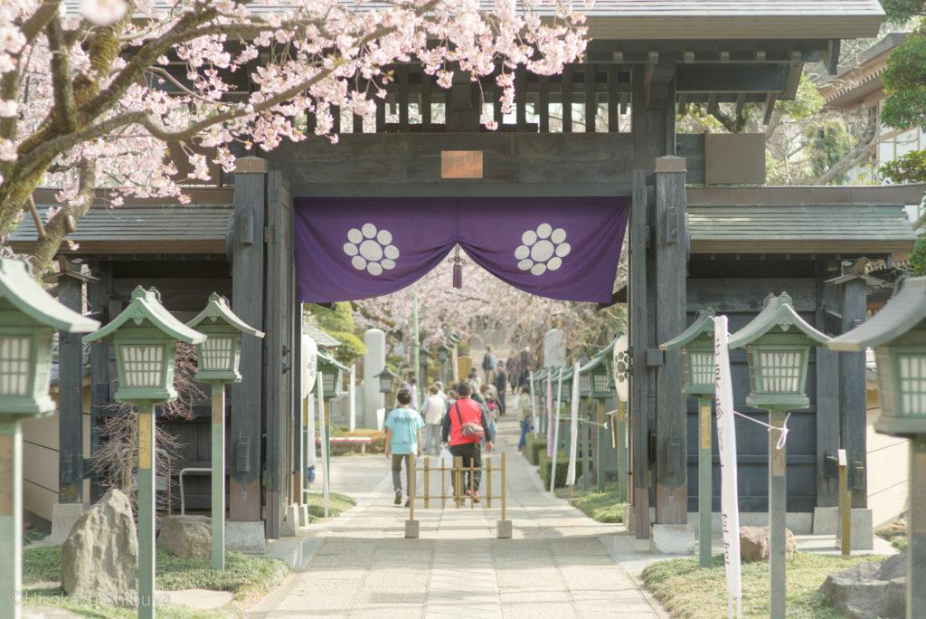 密蔵院の安行寒桜④(撮影地:埼玉県川口市)