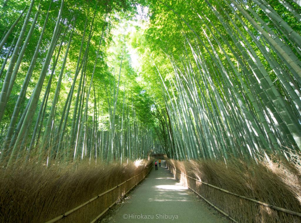 京都で写真を撮るなら押さえておきたい撮影スポット③ 竹林の小径