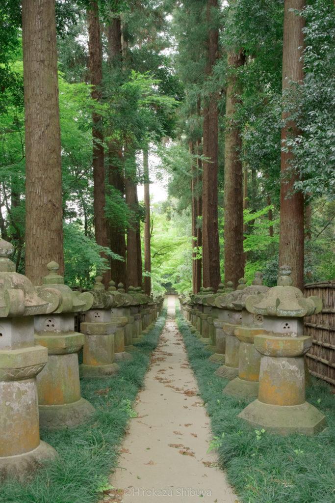 平林寺の新緑⑥ 廟所参道と新緑(撮影地:埼玉県新座市)
