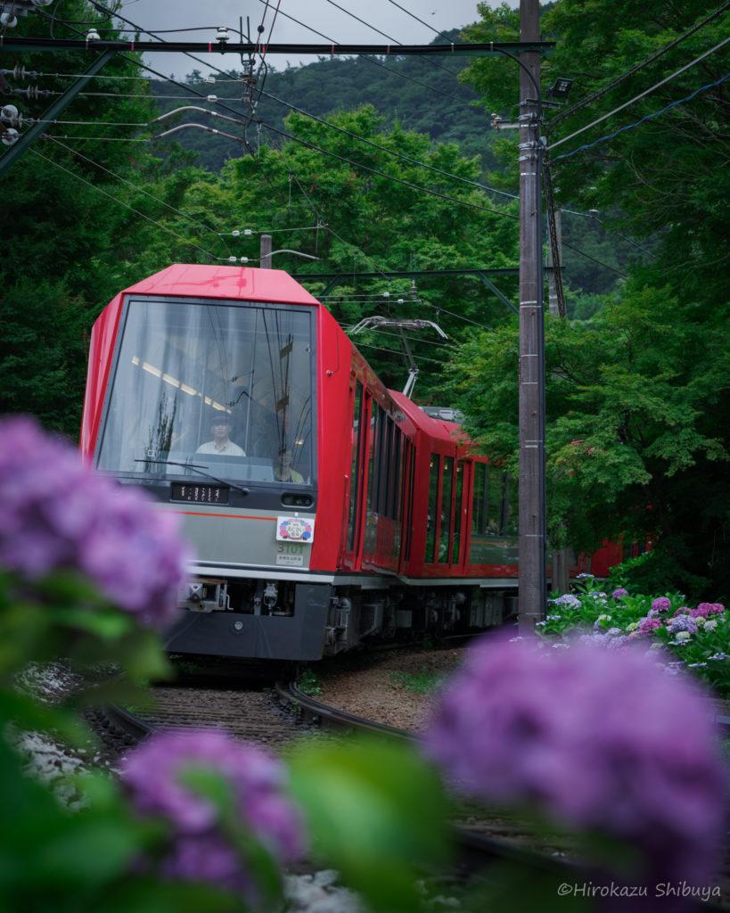 箱根登山鉄道+あじさいのおすすめ撮影スポット(大平台駅周辺①)