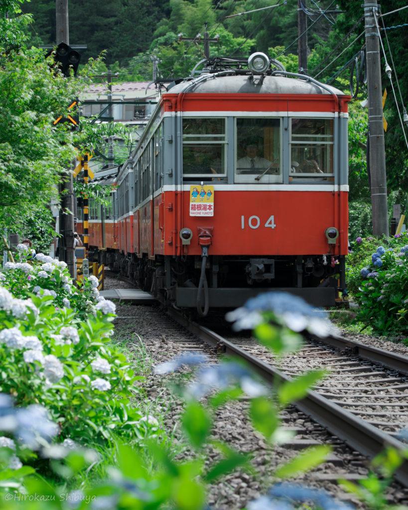 箱根登山鉄道+あじさいのおすすめ撮影スポット(大平台駅周辺③)